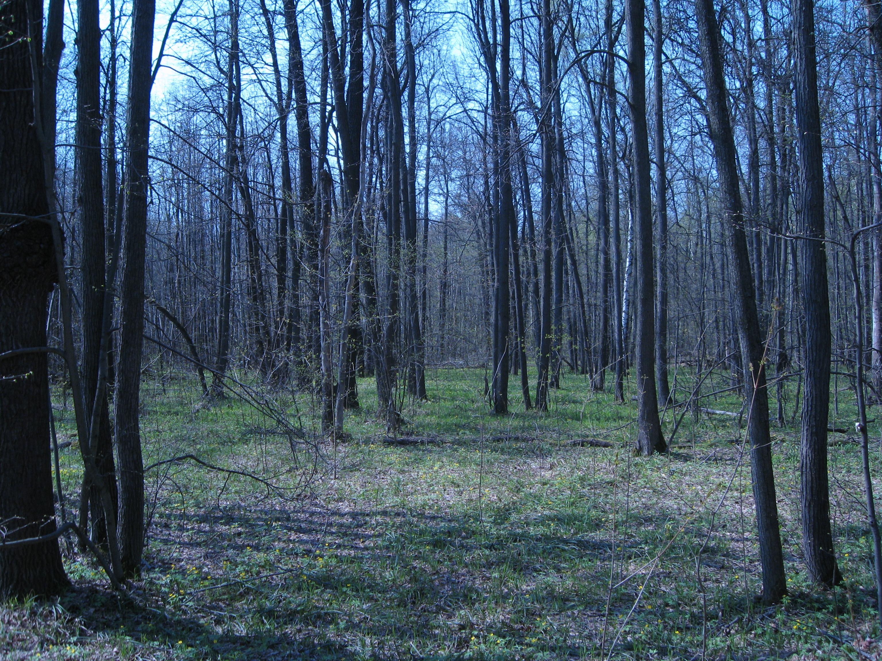 Пожароопасный сезон в тамбовских лесах начался на месяц раньше
